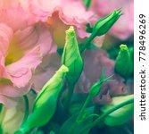 beautiful eustoma flowers ... | Shutterstock . vector #778496269