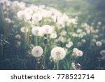a lot of fluffy beautiful... | Shutterstock . vector #778522714