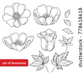 vector set with outline anemone ... | Shutterstock .eps vector #778618618