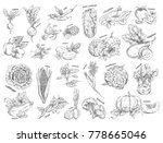 set of isolated vegetables... | Shutterstock .eps vector #778665046