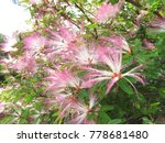 Small photo of Pink sensible flowers in the wind