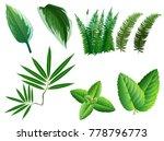 summer  spring leaves set.... | Shutterstock .eps vector #778796773