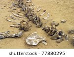 Fossil In Desert  Egypt