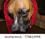 Silly Dog Wears A Red Hood And...