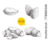 hand drawn sketch style almond...   Shutterstock .eps vector #778880368