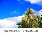 palm trees on blue sky... | Shutterstock . vector #778935868