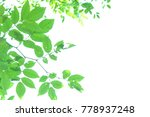 green leave and white... | Shutterstock . vector #778937248