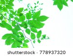 green leave and white... | Shutterstock . vector #778937320