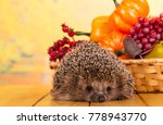 funny gray hedgehog sits on... | Shutterstock . vector #778943770