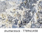 top of the trees covered with...   Shutterstock . vector #778961458