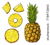 hand drawn sketch of pineapple... | Shutterstock .eps vector #778972843