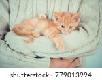 Stock photo cute little red kitten is sitting on his hands kitten in the hands red haired kitten soft tone 779013994