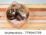three cute baby cat kittens in...   Shutterstock . vector #779041759