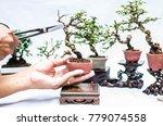Making Of Bonsai Trees....