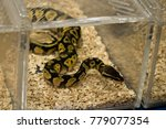 snake is crawl in the cage. | Shutterstock . vector #779077354