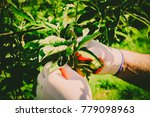 taking care of the garden and...   Shutterstock . vector #779098963