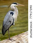 A Heron Perched On A Fallen Lo...