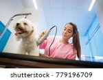 Stock photo young woman working in pet shop trimming dog hair with clipper girl grooming puppy for beauty in 779196709