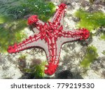 red starfish at low tide in the ... | Shutterstock . vector #779219530