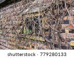 old garage window covered with... | Shutterstock . vector #779280133