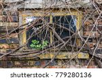 old garage window covered with... | Shutterstock . vector #779280136