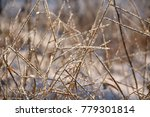 dry field grass covered with... | Shutterstock . vector #779301814