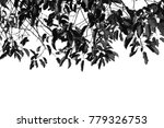 silhouette leaf isolated on...   Shutterstock . vector #779326753