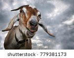 funny brown goat shows his...   Shutterstock . vector #779381173