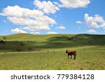 cows in a field in a lush green ...   Shutterstock . vector #779384128