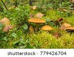 Inedible Mushrooms Close Up In...