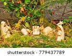 christmas nativity scene with...   Shutterstock . vector #779437789