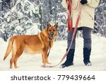 a woman holds the dog on a... | Shutterstock . vector #779439664