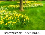 Beds Of Yellow And White Tulip...