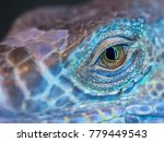 A Monster Reptile Eye. Blue...