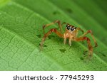 spider - stock photo