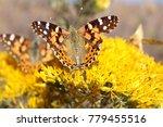 Butterflies At Red Rocks Park ...