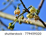 a unique floral on high tree. ... | Shutterstock . vector #779459320
