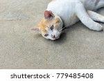 a cute naughty cat