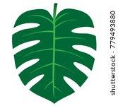 green monstera leaf  single... | Shutterstock .eps vector #779493880