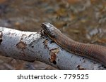 snake in the park   catoctin... | Shutterstock . vector #779525