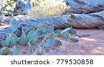 moab desert flora | Shutterstock . vector #779530858
