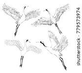 vector of illustrations bird... | Shutterstock .eps vector #779573974