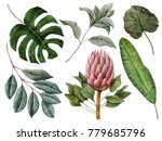 set of watercolor tropical... | Shutterstock . vector #779685796