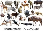 set of different african... | Shutterstock . vector #779692030