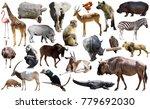 set of different african...   Shutterstock . vector #779692030