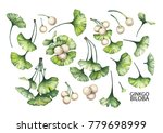 collection of watercolor ginkgo ... | Shutterstock . vector #779698999
