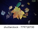 fallen leaf of maple on the... | Shutterstock . vector #779718730