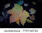 fallen leaf of maple on the... | Shutterstock . vector #779718733
