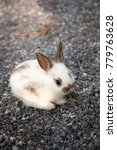 tiny adorable white and brown... | Shutterstock . vector #779763628