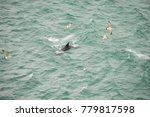 Dolphin Swimming Among Flying...